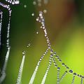 Web 20131022-34 by Carolyn Fletcher