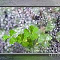 Web And Clover Art by Cindy Tiefenbrunn