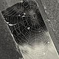 Web by Erika Weber