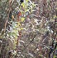 Web We Weave by Bonfire Photography
