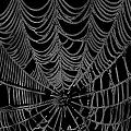 Web We Weave by Jack R Perry