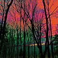 Webbs Woods Sunset by Expressionistart studio Priscilla Batzell
