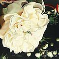 Wedding Belle by Edythe Alexander