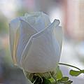 Wedding Flower by Sean Conklin