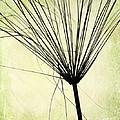 Weed In Green by Sabrina L Ryan