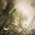 Weeded Desire - Dark  by Jamian Stayt