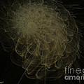 Weeds N Thorns by Dana Haynes