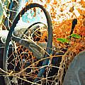 Weedy Steering by Gwyn Newcombe