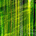 Weeping Willow Tree Ribbons by Carol F Austin
