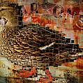 Weird Duck by Cindi Finley Mintie
