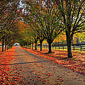 Welcome Home Bradford Pear Lined Drive-way by Reid Callaway