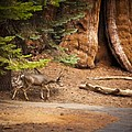 Welcome Home - Sequoia National Forest by Angela Stanton