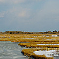 Welcome To Assateague by Lana Hauser