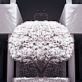 Welcome Tree Infrared by Adam Romanowicz