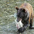 Well Done Little Bear by Ursula Salzmann