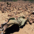 Welwitschia Mirabilis In Petrified Forest by Sinclair Stammers/science Photo Library