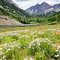 West Elk Wildflowers by Adam Pender