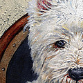 West Highland Terrier Dog Portrait by Portraits By NC