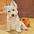 West Highland Terrier Puppy by Phyllis Tarlow