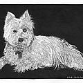 West Highland White Terrier by Jack Pumphrey