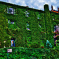 West Village Townhouse Ivy by Randy Aveille