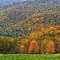 West Virginia High by Steve Harrington