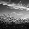 West Wind Bw by Steve Harrington