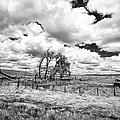 Western Kansas by Jay Stockhaus