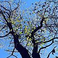 Western Michigan Trees 1 by Sylvia Herrington