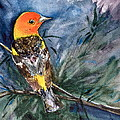 Western Tanager At Mt. Falcon Park by Beverley Harper Tinsley