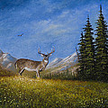 Western Whitetail by Chris Steele