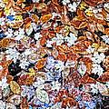 Wet Autumn Leaves by Kathryn Lund Johnson