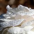 Wet Diamonds by Susan Herber