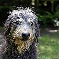 Wet Dog by Steve Ball