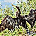 Wet Feathers by Jennifer Boisvert