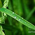 Wet Grasses by Susie Peek