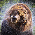 Wet Griz by Steve McKinzie
