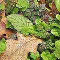 Wet Leaves by Belinda Greb