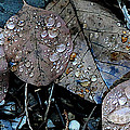 Wet Leaves by Artist and Photographer Laura Wrede