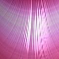 Wet Pink by Bill Owen