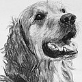 Wet Smiling Golden Retriever Shane by Kate Sumners