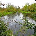 Wetland Greens by MTBobbins Photography