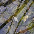 Wetland Reflections by Angela Hansen