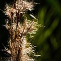 Wetland Sparkles by Ed Gleichman