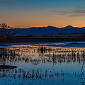 Wetland Twilight by DesertAura Photography
