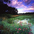 Wetland Wonder by Ray Mathis