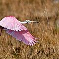 Wetlands Flight by Bill Dodsworth