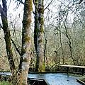 Wetlands In March by VLee Watson
