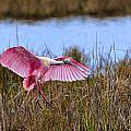 Wetlands Landing by Bill Dodsworth