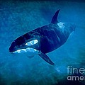 Whale by John Malone